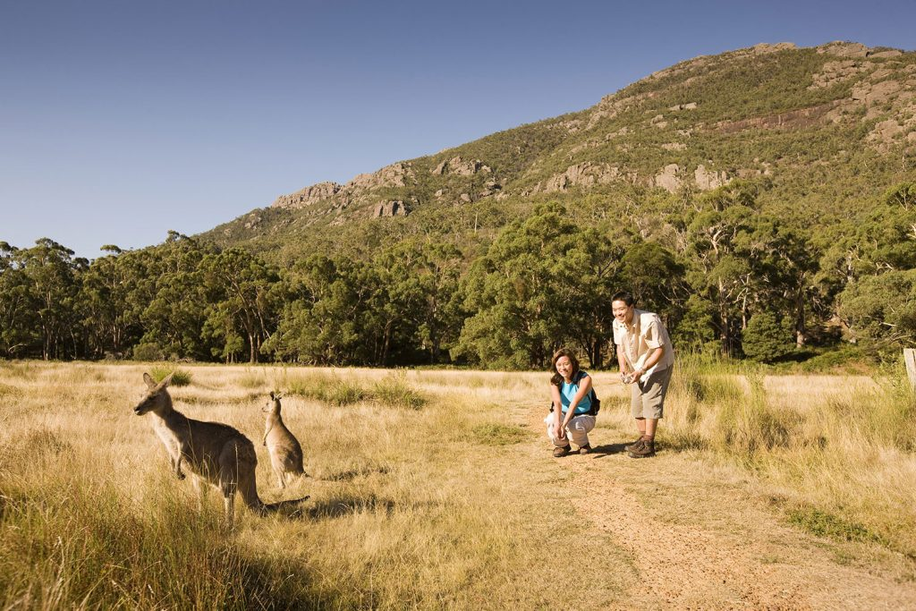 2 Day Great Ocean Road and Grampians Tour Wildlife encounters guaranteed